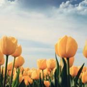 Phương Pháp Chửa Bệnh Mù Mắt | A Di Đà Phật