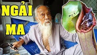"""Ông Tư Đền kể chuyện : Cây ngải ăn thịt """"ngải ma"""" của  dân tộc Lào"""