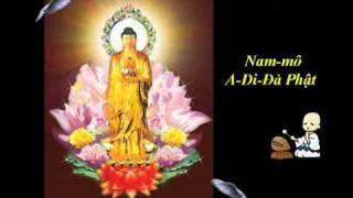 48 Đại Nguyện Của Đức Phật A Di Đà (Bản Việt Văn) - Thích Trí Thoát tụng