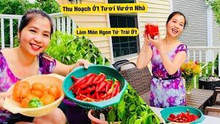 Thu Hoạch Ớt Tuơi Vườn Nhà - Làm Món Ngon Từ Trái Ớt | Năng Trần Cuộc Sống Mỹ