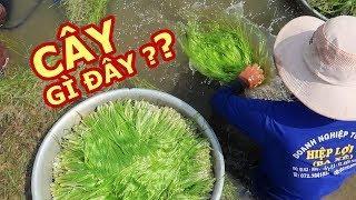 ĐẶC SẢN QUÝ HIẾM ở Miền Tây mùa nước nổi  Du lịch Việt Nam