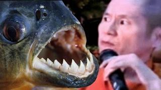 """Sự thật chấn động về Thích Chân Quang - Thủ phạm """"phóng sinh"""" 10 tấn cá chim trắng xuống sông Hồng"""