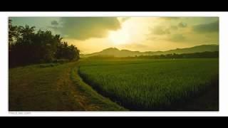 [Huệ Duyên] Dưới Bóng Cội Tùng của Phật Trùm