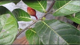10 Loại cây cực độc ở việt nam có thể giết người trong nháy mắt lá ngón chưa là gì