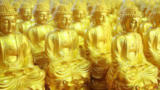 Lục căn , cội nguồn của trí tuệ - Phật học và đời sống