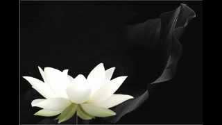 PGHH: Dưới Bóng Cội Tùng   Đức Phật Trùm Bửu Sơn Kỳ Hương