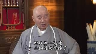 Nguồn Gốc của Tai Nạn và Bệnh Tật tập 1   4   Lão Hòa Thượng Tịnh Không