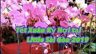 [Cuộc sống ở Mỹ] - Chợ Hoa Tết Kỷ Hợi ở Phước Lộc Thọ 2019 (Lunar New Year 2019) - [Tập #194]