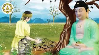 """Truyện Ngắn Phật Giáo """"GIEO GIÓ GẶT BÃO"""" không xem tiếc lắm đấy... PHÁP ÂM  PHẬT GIÁO"""